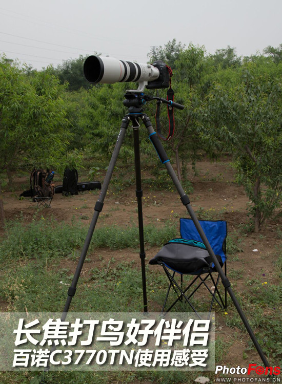 Testing out BENRO C3770TN Tripod When photographing Birds